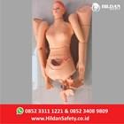 Manekin Alat Peraga APM 02 Phantom CPR-RJP Merk Hildan Safety  1