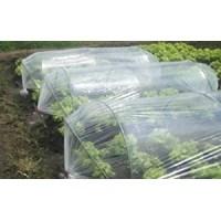 Distributor Produk Plastik Pertanian Plastik Sungkup Termurah  3