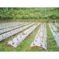 Distributor Produk Plastik Pertanian Mulsa Pertanian Termurah  3
