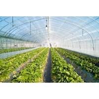 Distributor Produk Plastik Pertanian Plastik Uv Perkebunan Peternakan  3