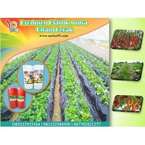 Produk Plastik Pertanian Mulsa Hitam Perak