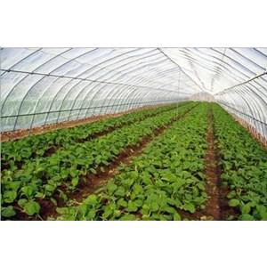 Plastik Ultra Violet Greenhouse Tumbuhan