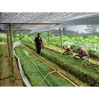 Jual Produk Plastik Pertanian Jaring Paranet Rajut 85%