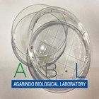 Alat Laboratorium Umum Petri Dish 2