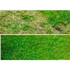 Durand 669 Weeds Exterminator-Weed Growth Inhibitor Herbicides 2