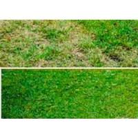 Jual Durand 669 Weeds Exterminator - Herbisida Penghambat Pertumbuhan Gulma 2