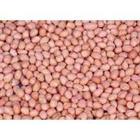 Kacang Tanah India