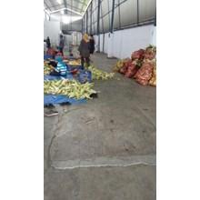 Jagung Manis Pipil - Global Sweet Corn