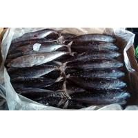 Ikan Segar Deho Beku
