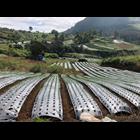 Produk Plastik Pertanian Mulsa Plastik Hitam Perak 4