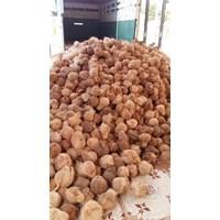 Beli Buah Segar Kelapa Kupas ( Coconut ) 4