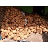 Distributor Buah Segar Kelapa Kupas ( Coconut ) 3