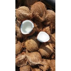 Buah Segar Kelapa Kupas ( Coconut )