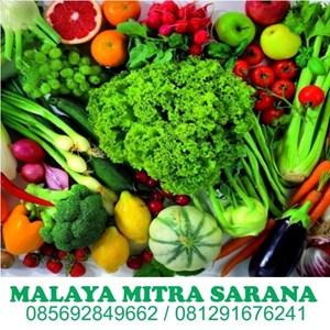 Supplier  Sayuran Segar