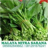 Jual Supplier Sayur Segar Untuk Hotel Dan Restaurant