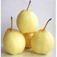 Distributor Buah Segar Pir Manis/Sweet Pears China 3