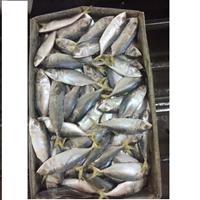 Ikan Kembung Segar 1