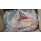 Ikan Mas WGGS RUM 1