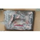 Ikan Nila WGGS RUM 1