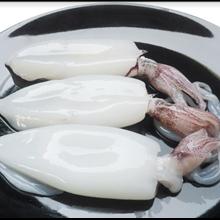 Cuttlefish Peel