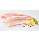 Ikan Patin 1