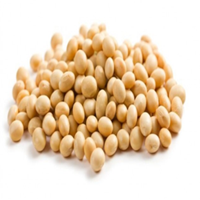 Jual Soya Bean