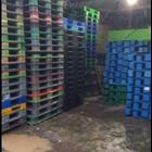Pallet Plastik bekas semua ukuran 130x110x12 cm 10