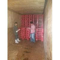 Distributor Pallet plastik bekas ukuran 110x110x15 cm model rata Lot  3 ton  3