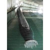 Mandrael Floating Hose 1