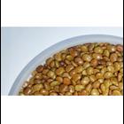 Kacangan Calopogonium Caeruleum (CC) 1