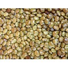 Kacangan Calopogonium Caeruleum (CC) 2