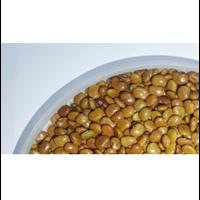 Calopogonium Caeruleum Cover Crop