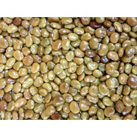 Sell Calopogonium Caeruleum Cover Crop 2