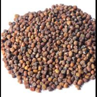 Kacangan Pueraria Javanica (PJ)
