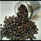 Kacangan Mucuna Bracteata (MB) 1