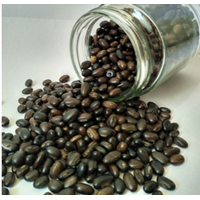 Jual Kacangan Mucuna Bracteata (MB)