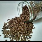Kacangan Centrocema Pusbescens (CP) 1