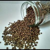 Kacangan Centrocema Pusbescens (CP)