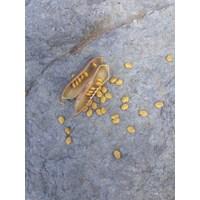 Kacangan Crotalaria Juncea (CRJ)