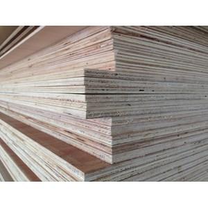 Plywood Palem (Kayu Lapis Palem)