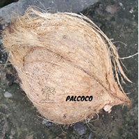 Palcoco 1