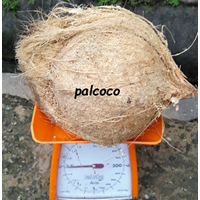 Jual Semi Husked Mature Coconut Indonesia