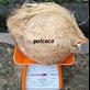 Semi Husked Mature Coconut Indonesia