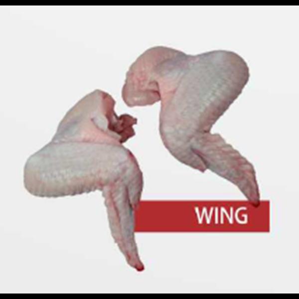 Daging Ayam Wing