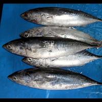 Ikan Deho 1