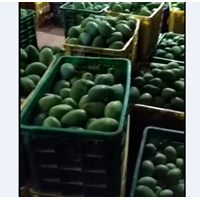 Jual Mango Harum Manis