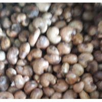 Jual Kacang Mete Glondongan