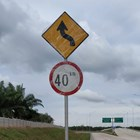 Road Sign Winding Road and Speed Limit 1