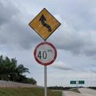 Rambu Jalan / Rambu Lalu Lintas Berliku dan Batas Kecepatan 1