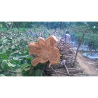 Distributor Help Your Brother There Is Teak Wood Stock Red 3
